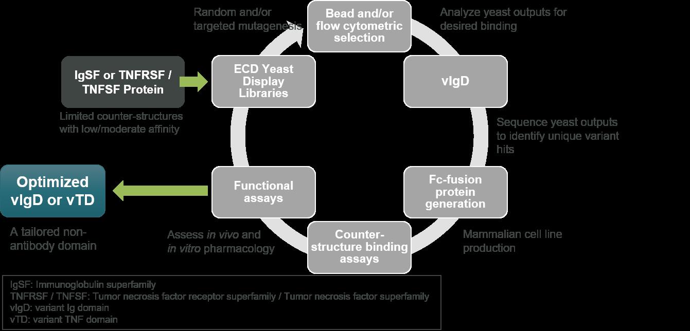 Directed Evolution Platform